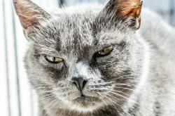 cat-334383_1920